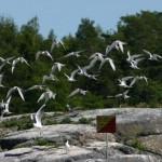 Fågelskären – Vänerns fågelberg