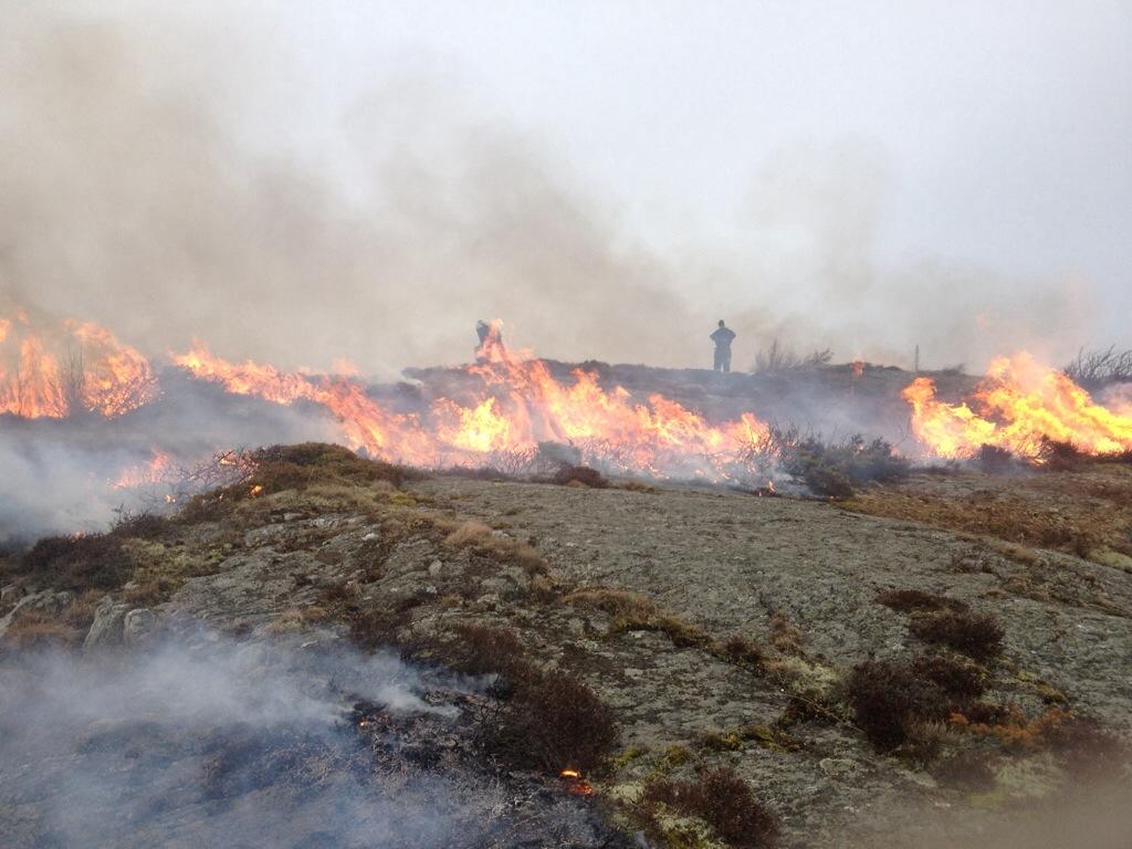 Ljungbränning på Rörö
