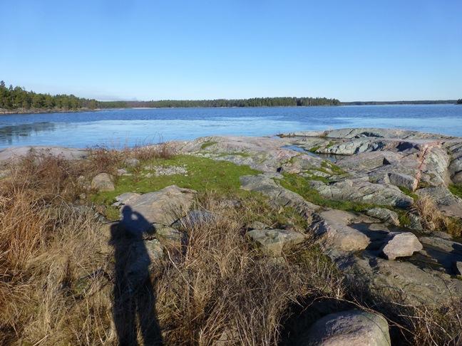 Fina häckningsytor för tärnor och mås efter röjning på Bärö hall i Segerstads skärgård