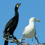 Ny folder om fågelskärsinventeringen för Vänern, Vättern och Mälaren
