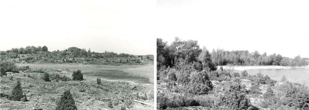 Fotografier från Ärnön i Lurö skärgård. Det vänstra är taget 1971 då det fortfarande fanns betesjur på ön. Det högra är taget 2014. Foto: Hans Kongbäck och Gunnar Lagerkvist