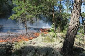 Naturvårdsbränning på Harvelsön utanför Liljedal.