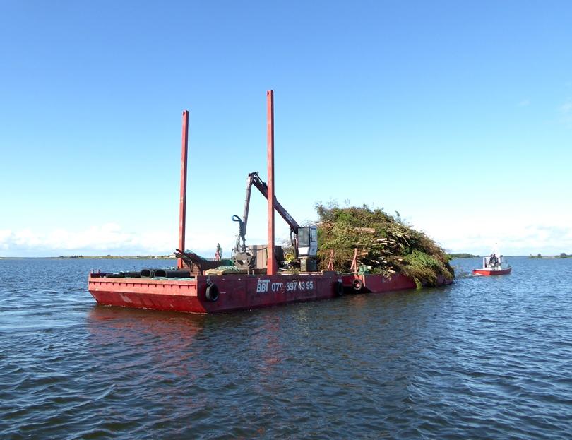 Det avverkade materialet transporteras till fastlandet med hjälp av pråmar.