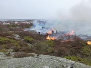 Ljungbränning Rörö
