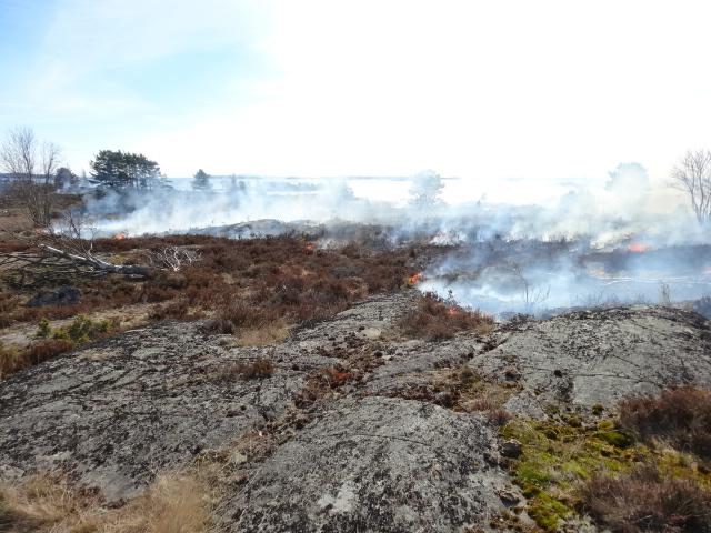 Bränning av ljunghed på Vithall, april 2014