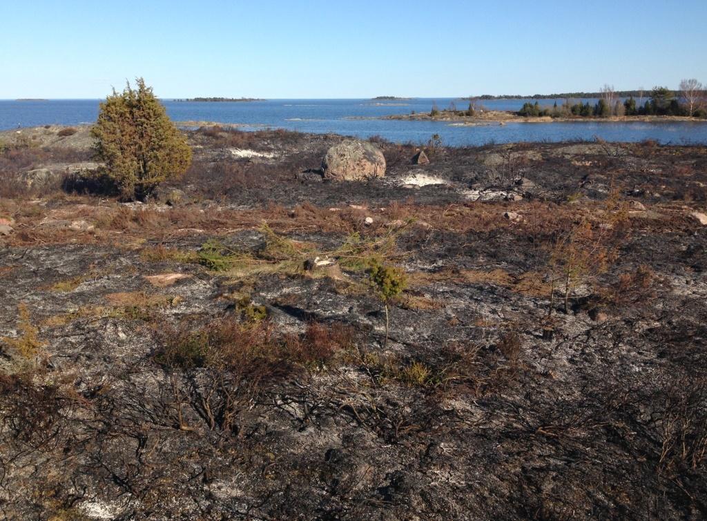 Varierade markbetingelser och bränning av rishögar skapde ett mosaikartat bränningsförlopp. Ärnön 12 april 2016.