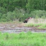 Fräsning av tuvor och stubbrester i våtmarken vid Djupsundsviken.