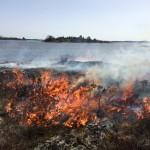 Avslutande eldning av ljunghedar på öarna i Lurö skärgård